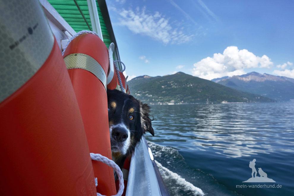 Wandern mit Hund, mein Wanderhund Ari, Andrea Obele, Cannobio, Lago Maggiore