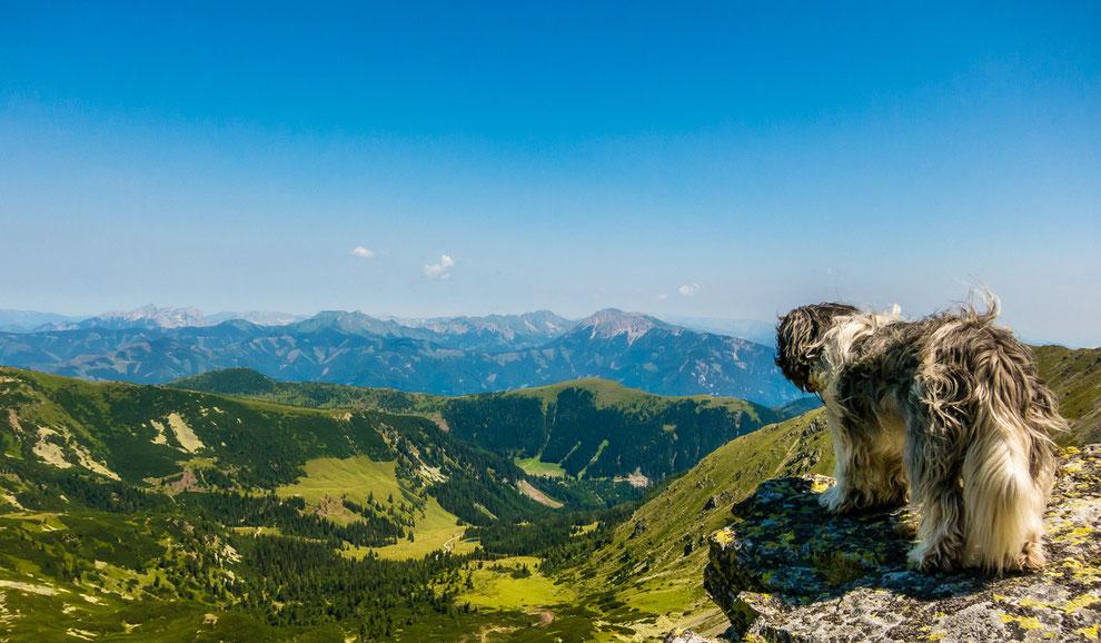 Wandern mit Hund, Wandern mit besonderen Hunden: Der haarige Schapendoes Clarence.