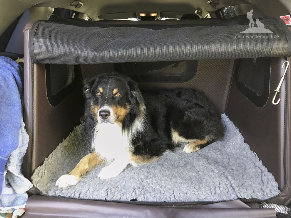 Test; Hundebox; aufblasbare Hundebox; tami; mein-wanderhund; Airbag-Hundebox