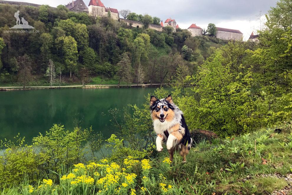 Wandern mit hund; Burghausen, mein Wanderhund; Längste Burg der Welt,