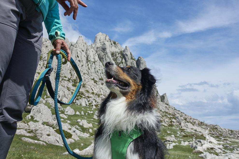 mein wanderhund; Andrea Obele; Wandern mit hund; Leine