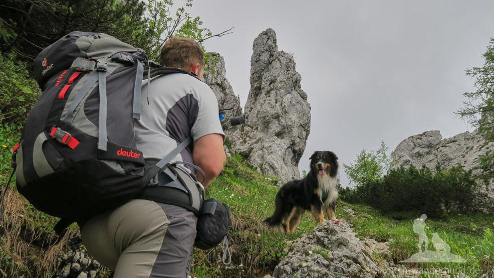Mit dem Hund auf die Hörndlwand wandern