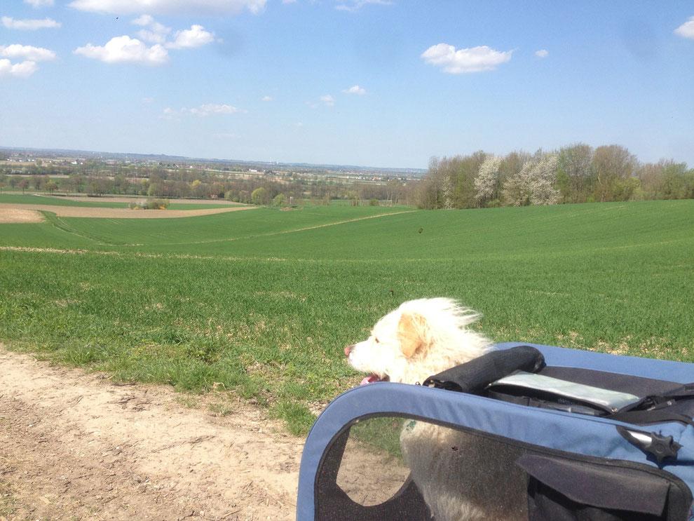 Wandern mit Hund, Wander mit hund mit Handicap, wandern mit kaputtem bein