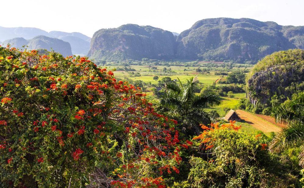 Vinjaleso slėnis, tabako namelis ir mogotai tolumoje