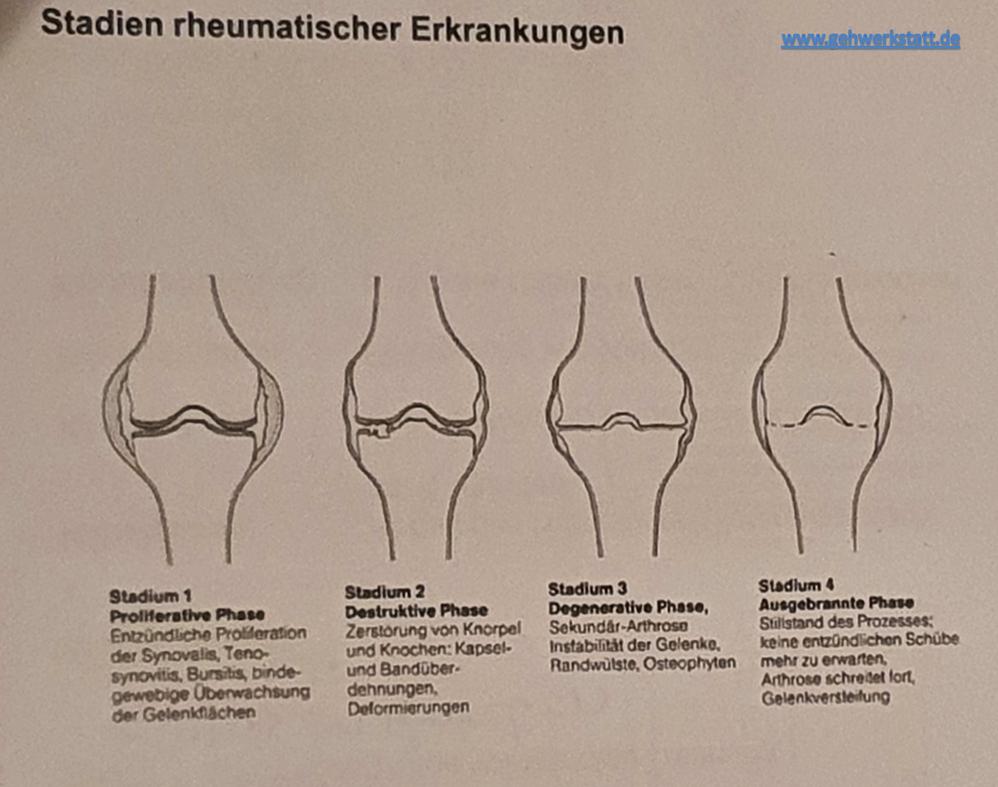 Quelle Meisterschulkurs 2015 Anatomie