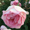 Bouquet Parfait