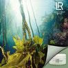 Tester les nouveaux produits cosmétiques Algétics Thalasso LR Health & Beauty et profitez de la puissance des algues pour soigner votre corps