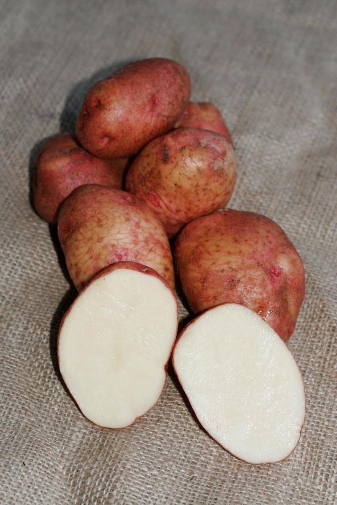 Härtl Kartoffeln