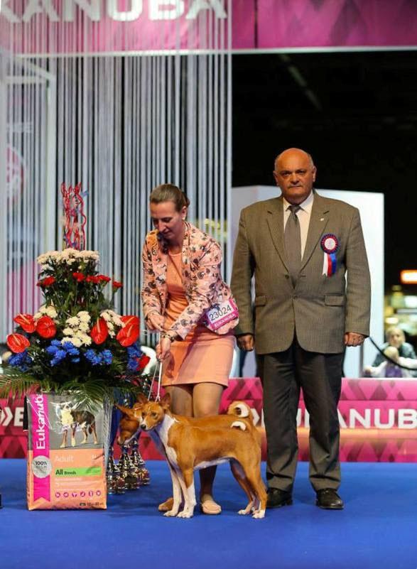23 10 14 Euro Dog Show 2014 Brno, Czech Republic - Kennel basenji