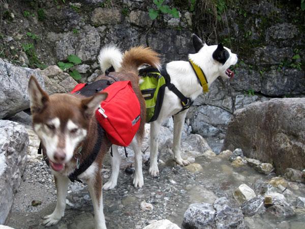 Klettergurt Hund : Ausrüstung infoportal zu dogscooting bike jöring zughundesport