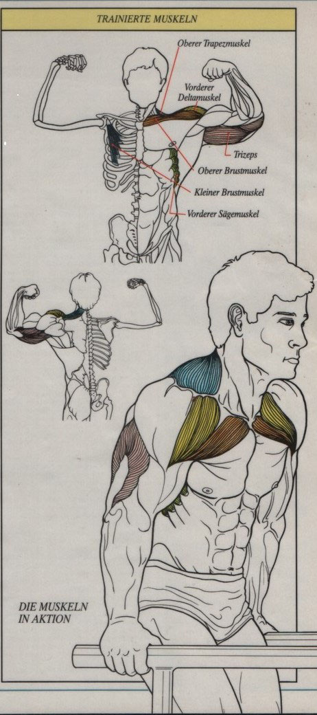 Großartig Wo Die Deltoidmuskel Befindet Ideen - Menschliche Anatomie ...