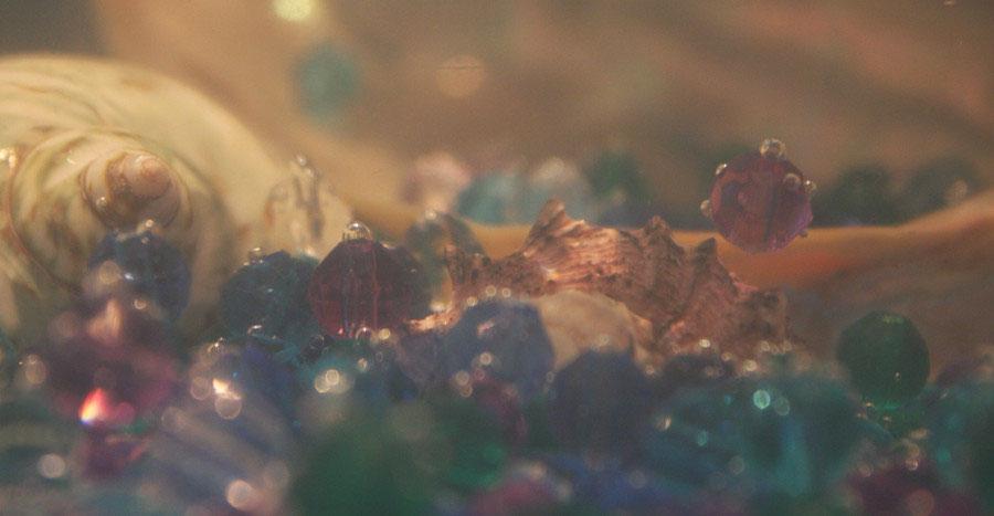 Muscheln Fantasie Wirklichkeit Fotografie Und Gedichte