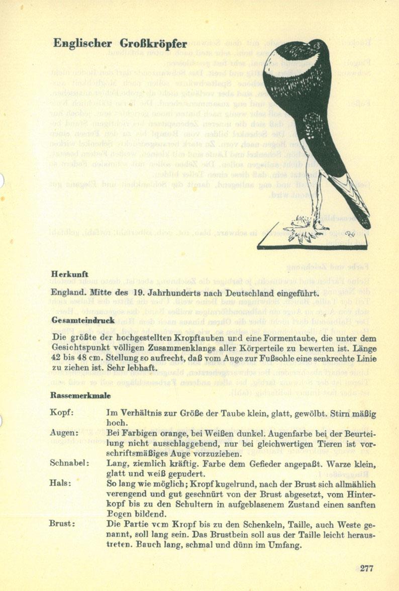 Rassegruppe Kropftauben - Die Gestalt der Taube