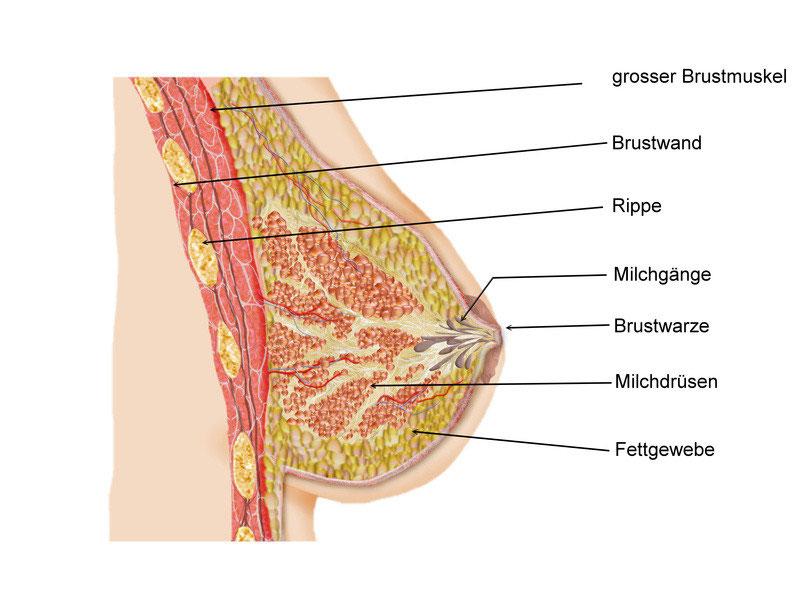 brust schmerzen nach der menopause