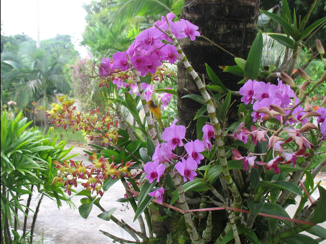 Maison de vacances a louer en thailande ventana blog for Maison vacances a louer