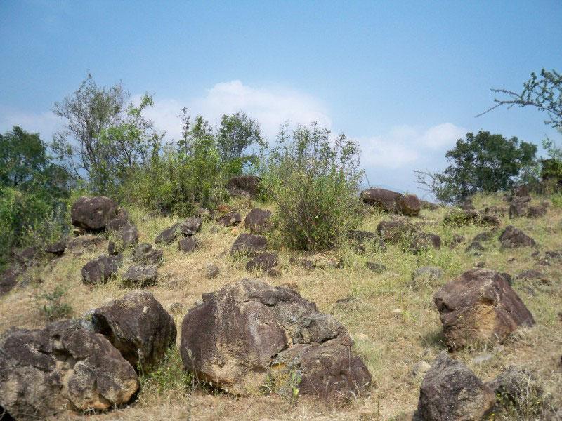 Chinnar Wildlife Sanctuary - greetingsfromindias jimdo page!