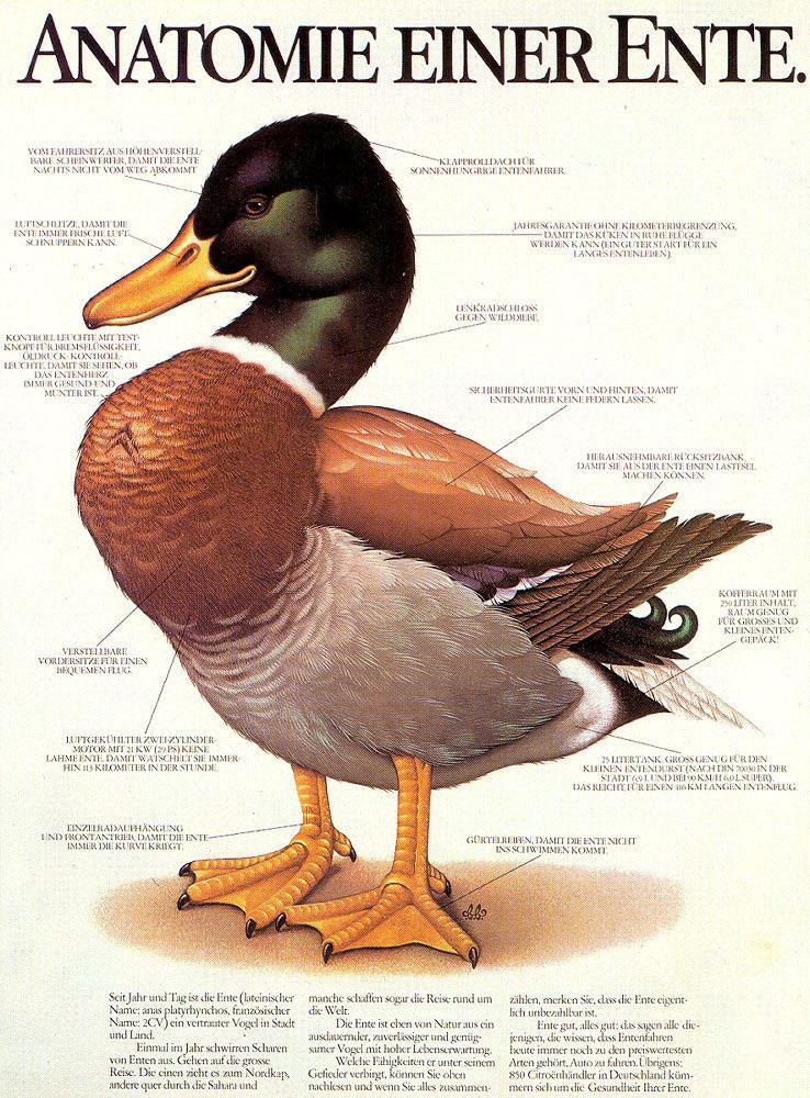 Anatomie einer Ente - der-ent-husiasts Jimdo-Page!