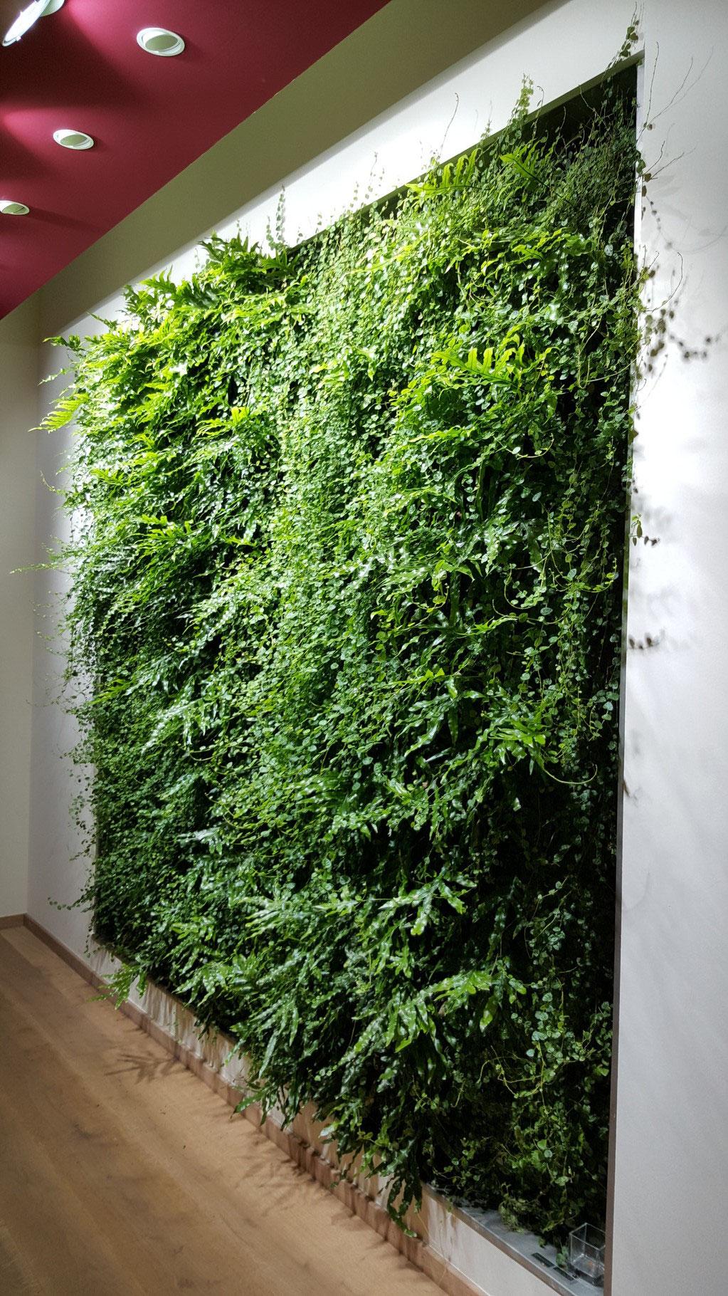 Fesselnde Pflanzen Wand Foto Von Grüne Nach 10 Monaten