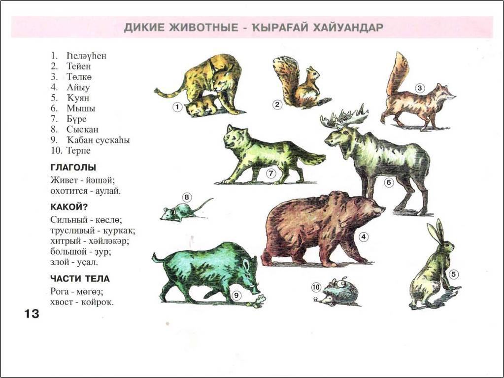 изложение на башкирском языке тейен менэн буре