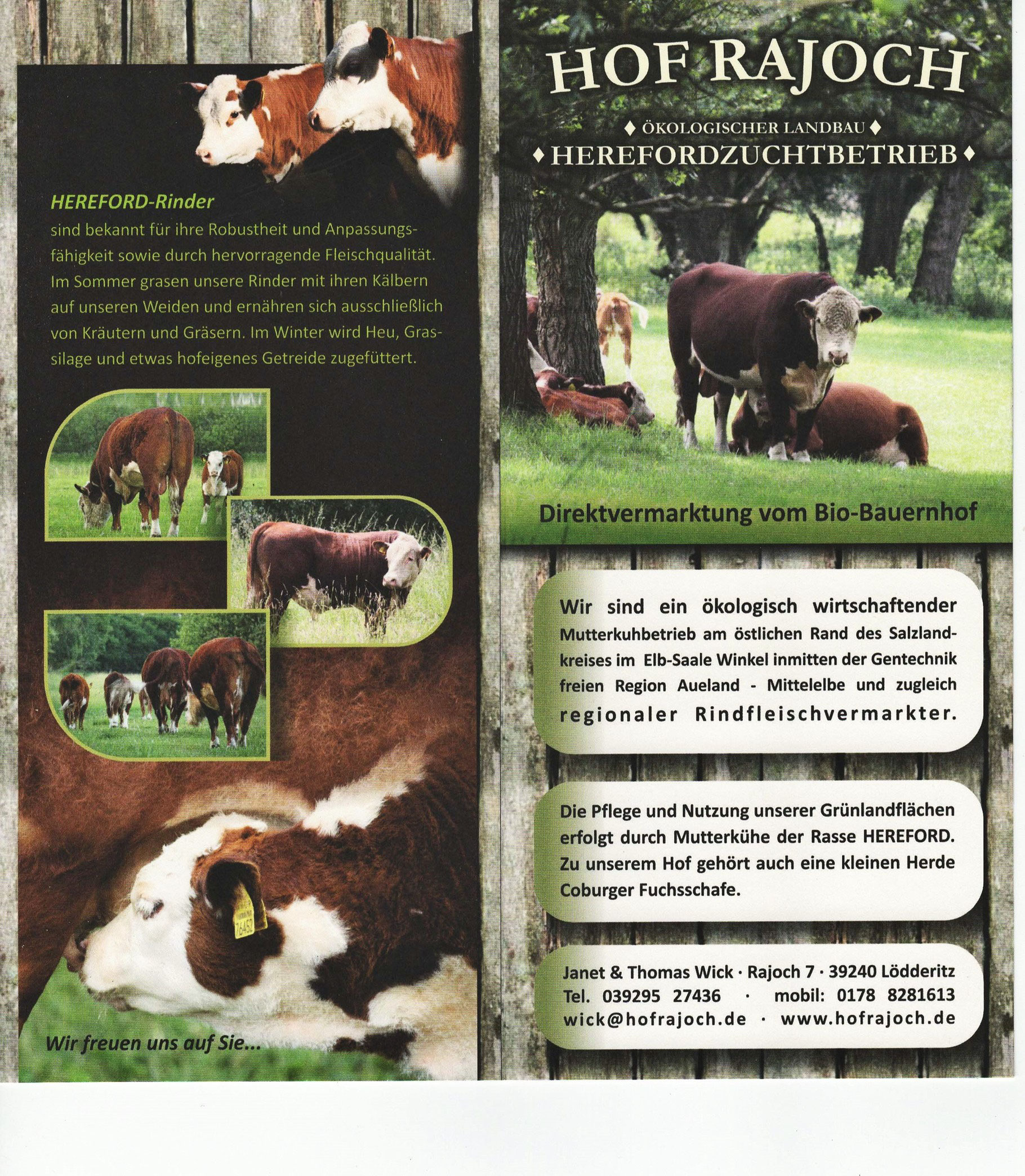 Top Rindfleisch, Hereford, Longhorn - Hereford HOF RAJOCH #SF_85