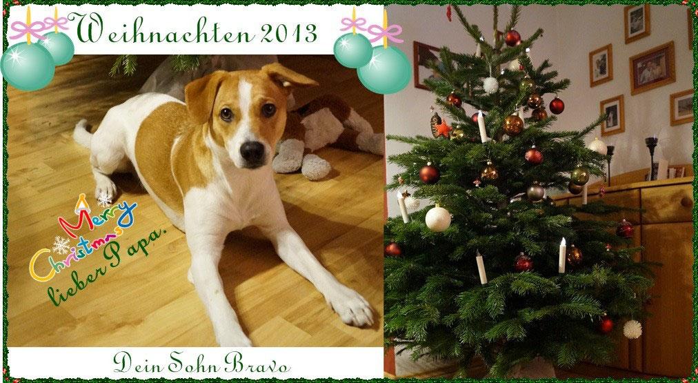 Weihnachtsgrüße An Sohn.Große Hundehochzeit Mit Folgen Dansk Svensk Gardhund Welpen