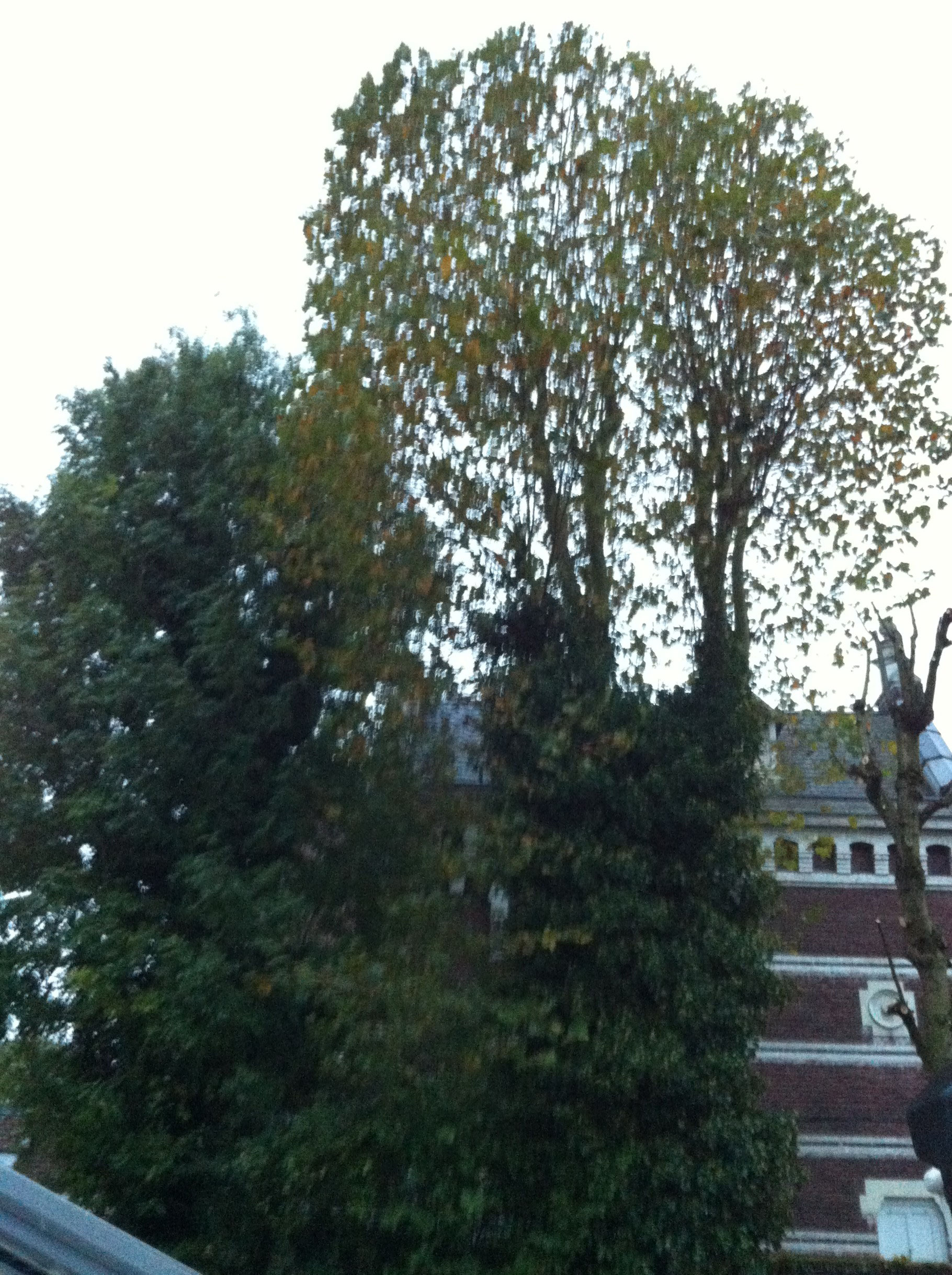 elagage arbre bondues