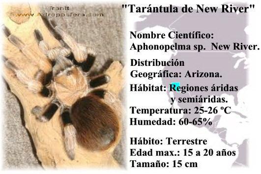 Tarantulas - Artroposfera: Tienda online de material para reptiles y ...