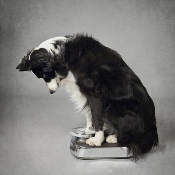 Ernährungsberatung - Mission-Hund, mobile Problemhundetherapie in ...