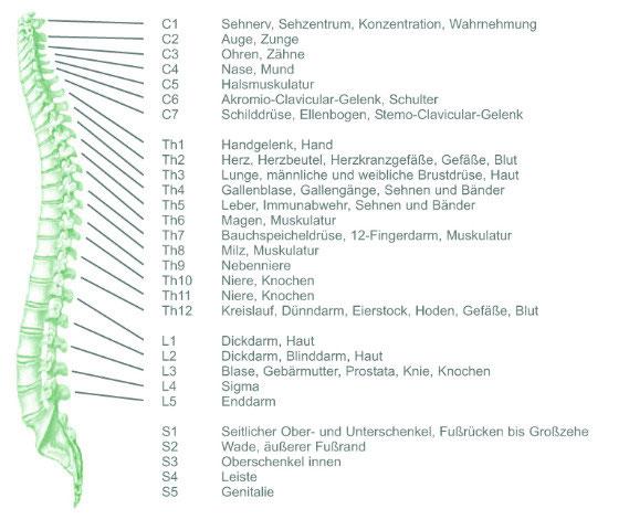 Unsere Wirbelsäule - Sanfte Manuelle Therapie Düsseldorf Heike Ruiter