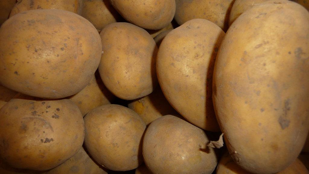 c484ece29e2328 Linda(festkochend) - Kartoffel-Planet-Berlin