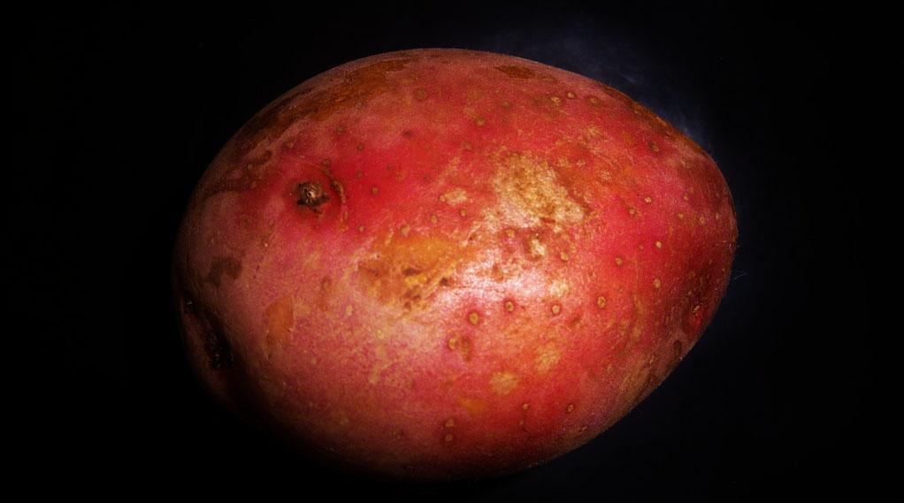 Laura Die Bordeauxrote Pommes Königin Vorwiegend Festkochend