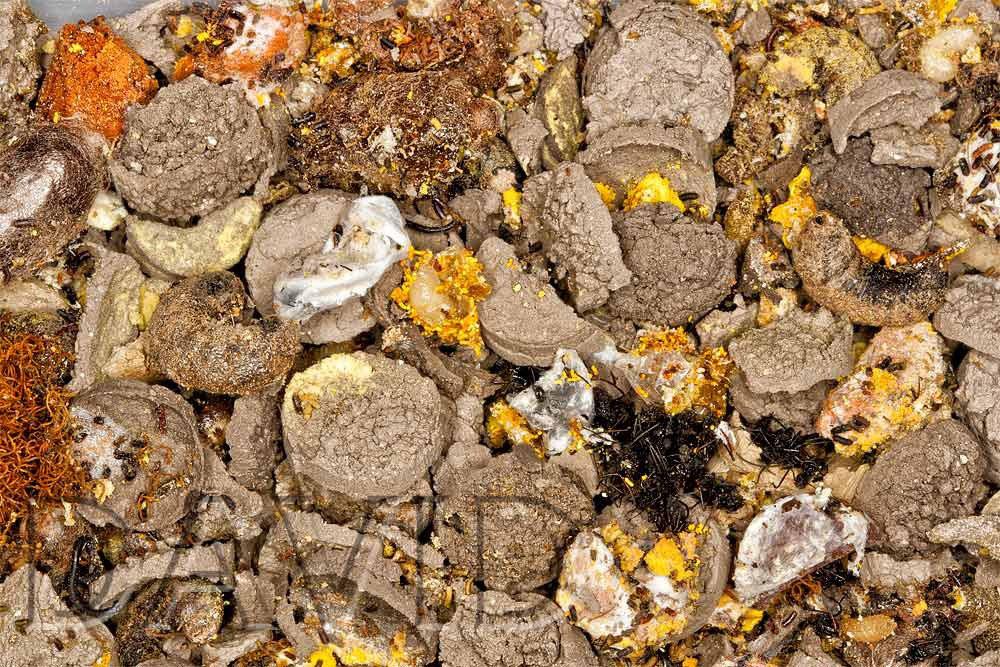 Fabelhaft Reinigung von Nisthilfen für Wildbienen? - Wildbienenschutz im &UT_56
