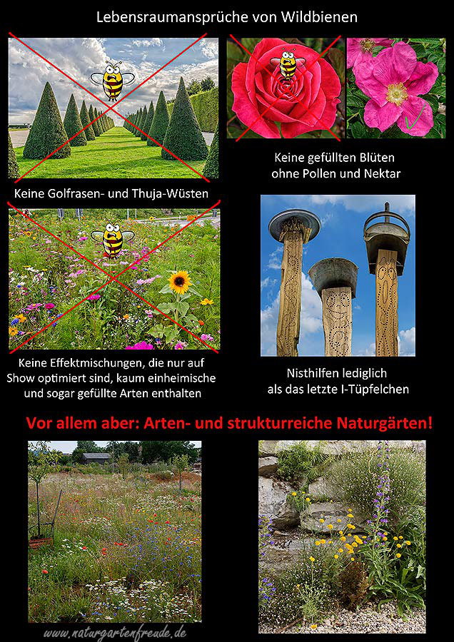 Pdf Dateien Wildbienen Wildbienenschutz Im Naturgarten