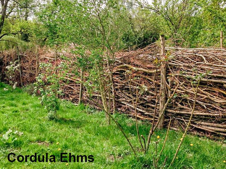 Super Gefüllter Totholzzaun nach Art des Hauses - Wildbienenschutz im #UM_79