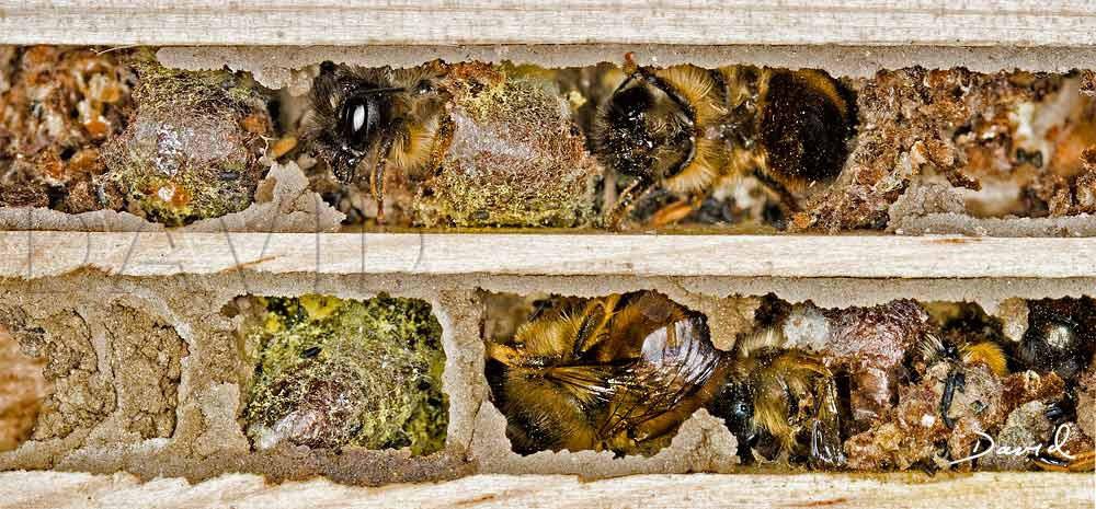 Lieblings Reinigung von Nisthilfen für Wildbienen? - Wildbienenschutz im #FS_41