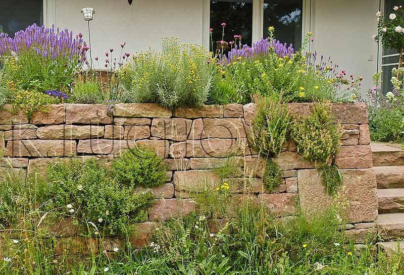 Pflanzen Auf Trockenmauern Wildbienenschutz Im Naturgarten