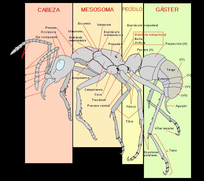 Anatomía - Artroposfera: Tienda online de material para reptiles y ...