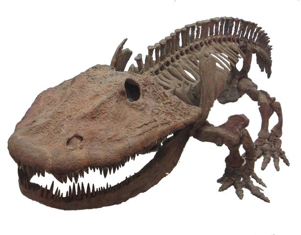 初期陸生四肢動物の皮骨は、血液...