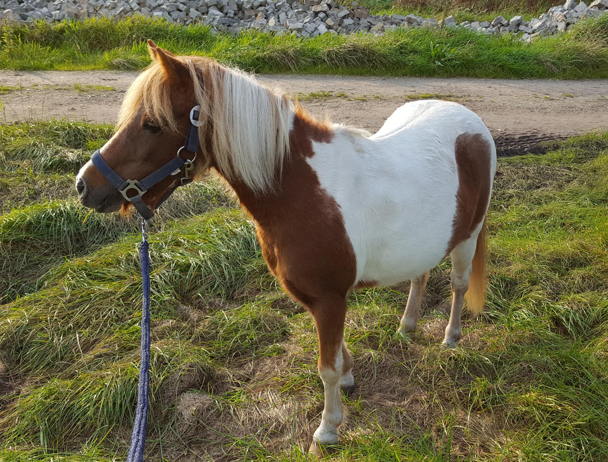 2017 zog Ponystute Daisy ein