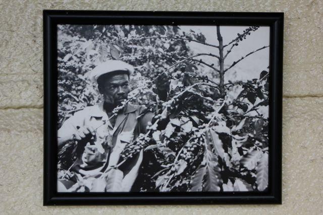 Pflücker bei der Arbeit (Bild hängt am Wallen Haus)
