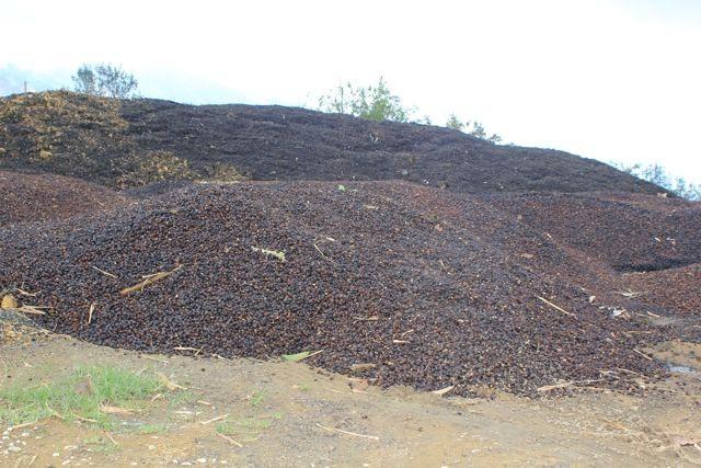 Kaffeekirschenfleisch wird zu Kompost