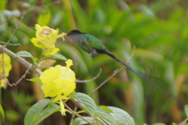 Kolibris findet man auf der Insel überall