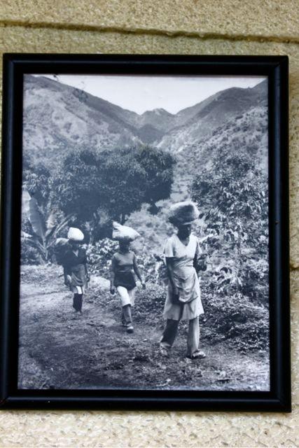 Frauen die Kaffeekirschen tragen (Bild hängt am Wallen Haus)