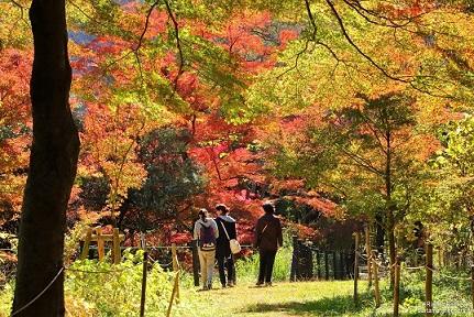 優良賞 「秋めく遊歩道」 鈴木 行男 3号地(武蔵嵐山渓谷周辺樹林地)