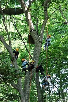 優良賞 「楽しい木登り」 山中 三郎 5号地(山崎山の雑木林)