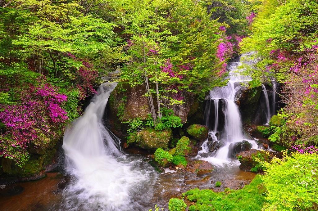 竜頭の滝とミツバツツジ