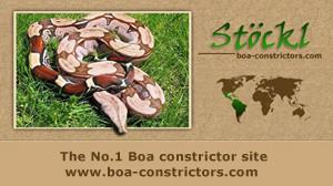boa-constrictors.com
