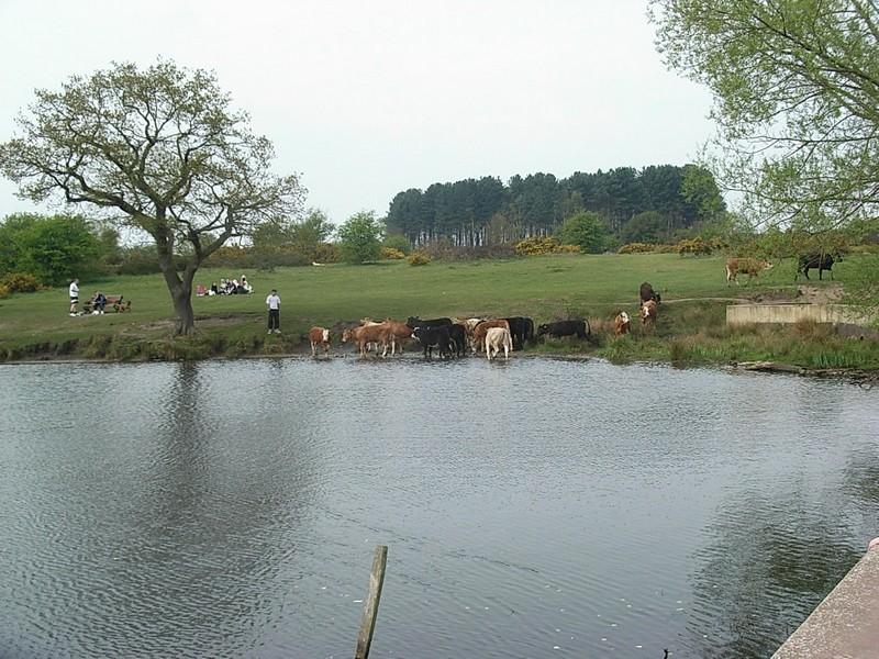 Longmore Pool