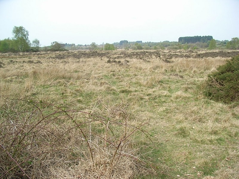 Heathland produces tough grasses and low-growing shrubs.