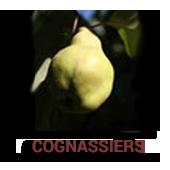 Cognassiers